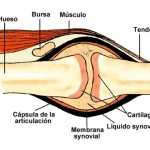Articulación Sinovial